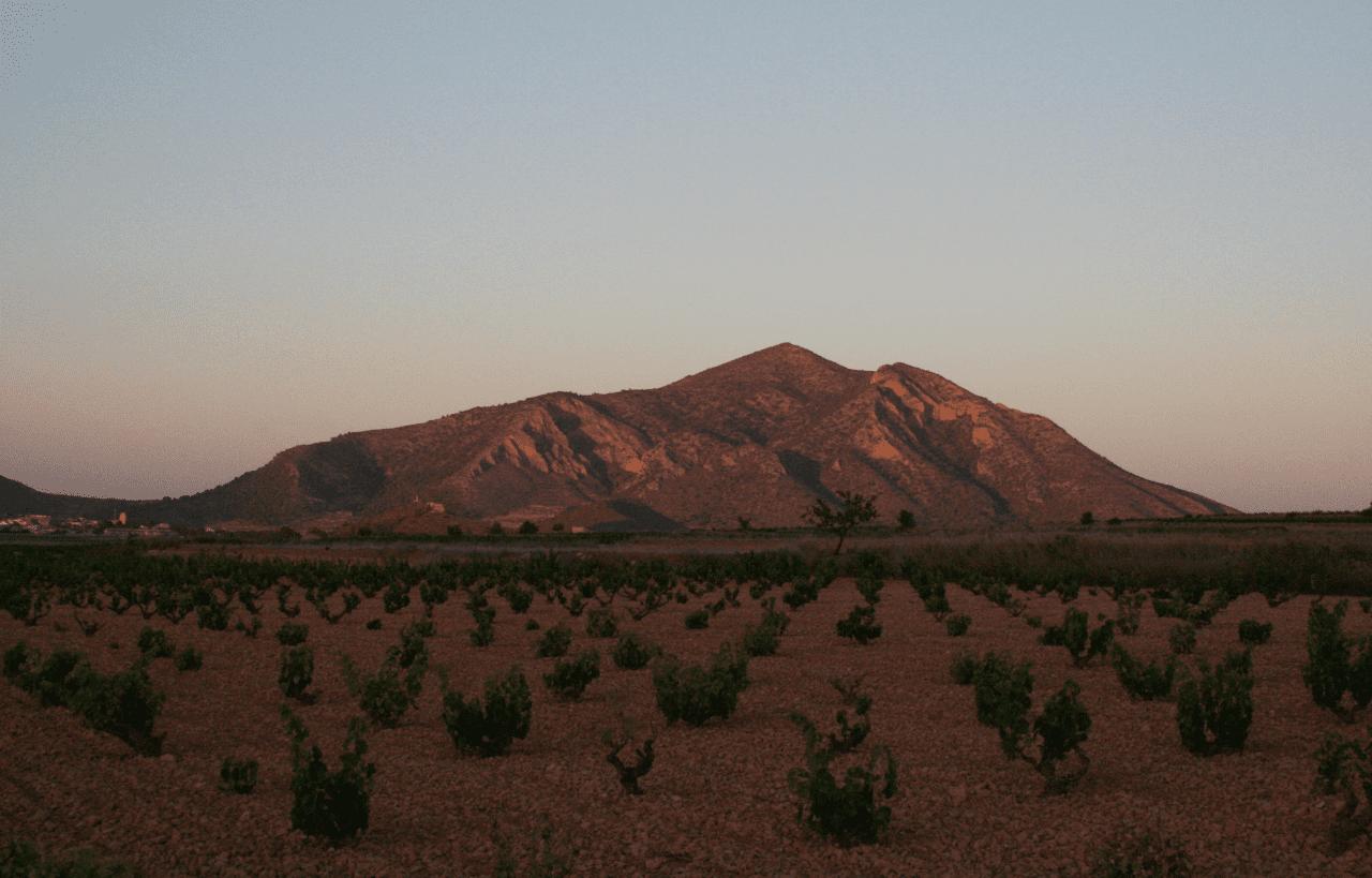 Vinos de Alicante: conoce sus variedades y características
