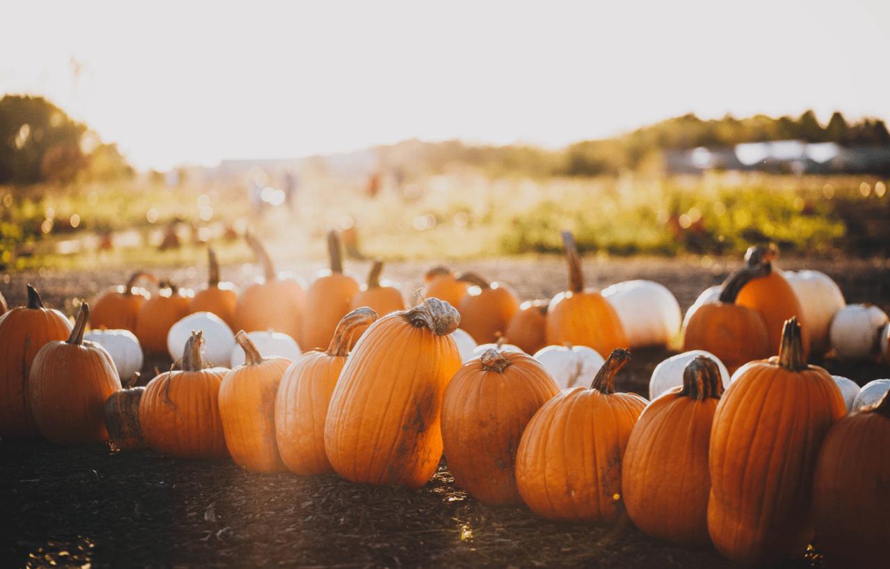 Alimentos de otoño: ¿cuáles son y qué propiedades tienen?