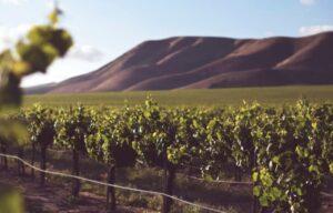 vinos mediterraneos, todo lo que debes saber