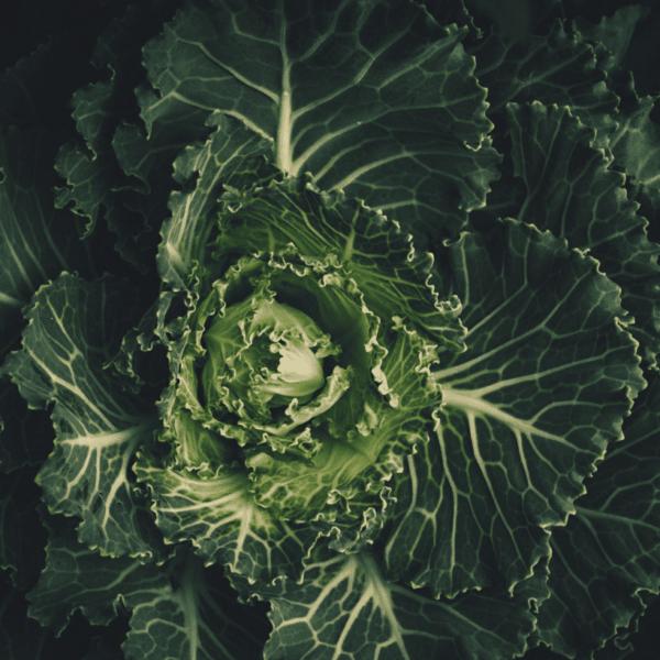 tabla de calorias de verduras: kcal de cada tipo de verdura