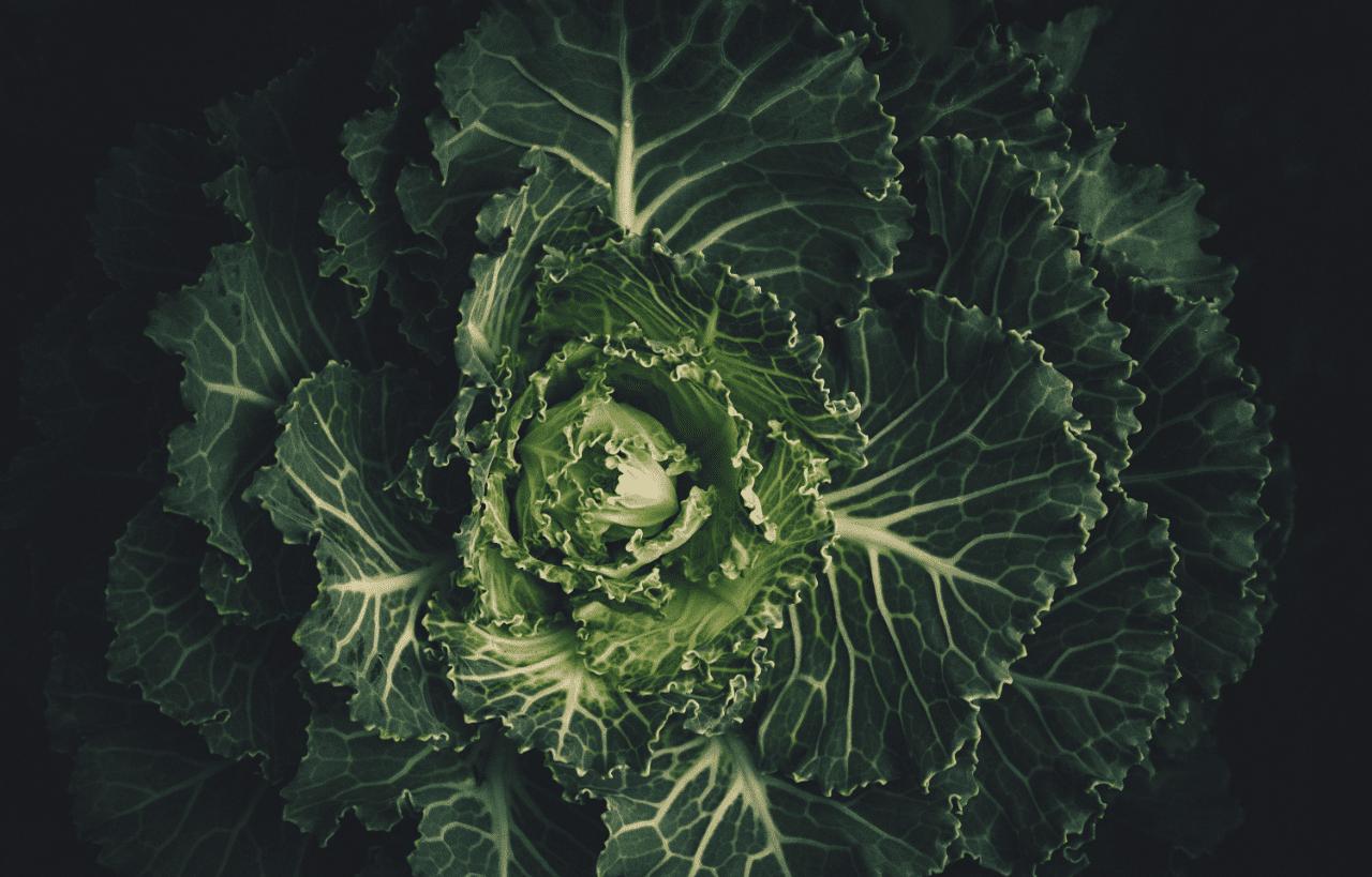 Tabla de calorías de verduras: Kcal de cada tipo de verdura